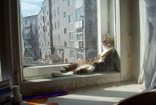 Cat in double glazing