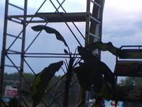 2006_0623kiev0009